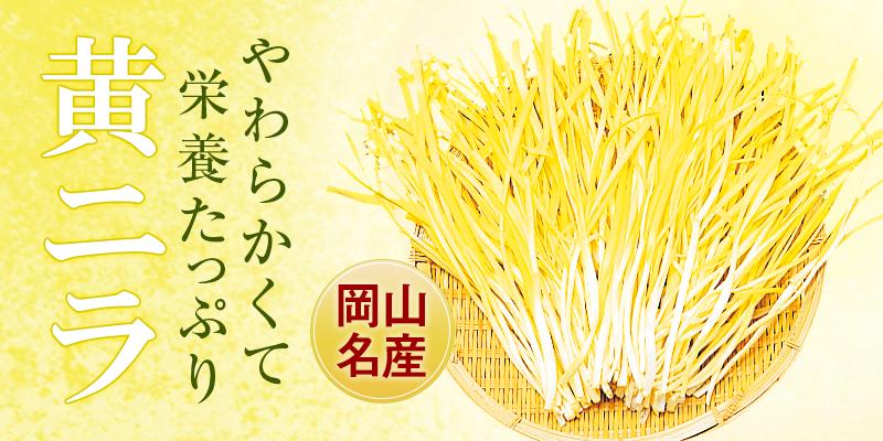 岡山産黄ニラ